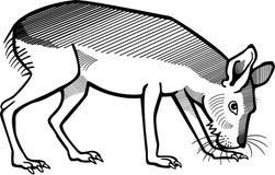 Mara иллюстрация вектора
