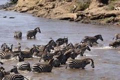 Mara-Fluss-Überfahrt Stockfoto
