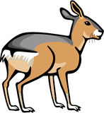 Mara. Illustration of a large rodent the mara Stock Images