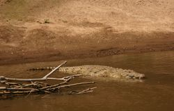 Mara krokodyla Obraz Stock