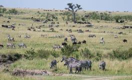 Mara Landscape Lizenzfreies Stockfoto