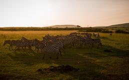 mara masai Στοκ Εικόνες