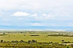 mara masai Arkivfoton