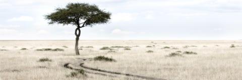 mara masai στοκ εικόνα