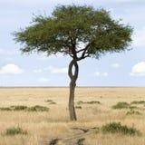 mara masai royaltyfria bilder