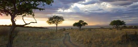 mara masai Royaltyfri Bild