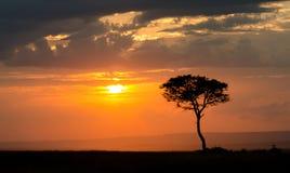 mara masaisolnedgång Fotografering för Bildbyråer
