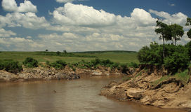 Mara River Stock Photography