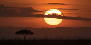 Mara Sunrise. A desert date is dominated by a rising sun on the Mara Stock Photo