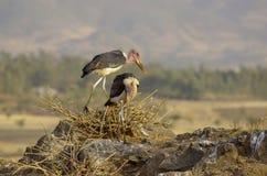 Maraboeooievaars dichtbij droog meer in Ethiopië royalty-vrije stock afbeeldingen