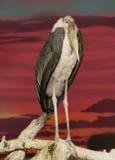 Marabou πουλιών Στοκ Φωτογραφία