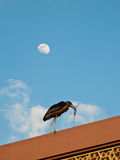 Marabou with a branch walking on the roof. Against the background of the Moon Royalty Free Stock Photos