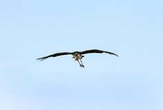 A Marabou Stork on blue sky Stock Photo