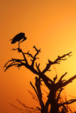 Marabou stork in shadow (vertical picture) Stock Photo
