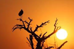 Marabou stork and a white sun Stock Photos