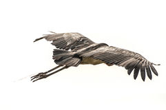 MarabouStork i flyg Royaltyfri Fotografi