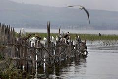 Marabu en zeemeeuw Stock Fotografie