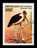 Marabustork (den Leptoptilos crumeniferusen), fågelserie, circa 199 Arkivbild
