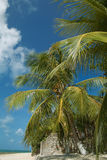 Maracaju's beach,Natal royalty free stock image