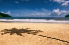 Maracas海湾特立尼达和多巴哥海滩棕榈树阴影 免版税库存图片