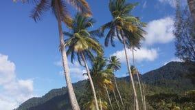 Maracasstrand Trinidad Stock Fotografie