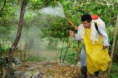 Maracuya plantation fumigating stock image