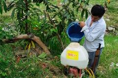 Maracuya plantation fumigating Royalty Free Stock Photography
