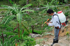 Maracuya plantation fumigating Royalty Free Stock Photos
