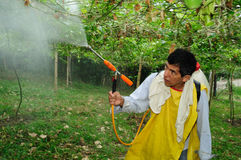 Maracuya plantation fumigating Stock Photography