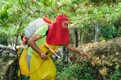Maracuya plantation fumigating Royalty Free Stock Images