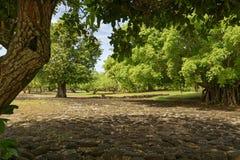 Marae de Taputapuatea em Raiatea foto de stock