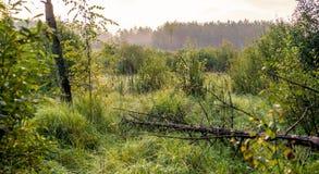 Marais à l'aube photographie stock