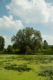 Marais Images stock