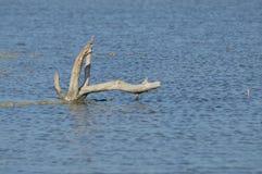 marais Photo libre de droits