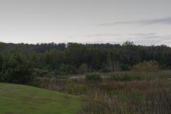 Marais au crépuscule Photo stock
