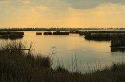 Marais au crépuscule Photo libre de droits