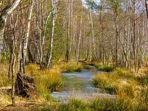 Marais augmenté en parc Krajobrazowy de Mazowiecki en Pologne Photos libres de droits