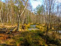 Marais augmenté en parc Krajobrazowy de Mazowiecki en Pologne Photographie stock