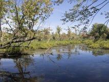 Marais avec des arbres Photographie stock libre de droits