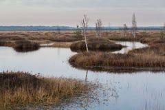 Marais avec la crique pendant l'automne Photos stock