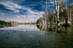 Marais brumeux en automne Paysage mélancolique froid avec de l'eau va Photos stock