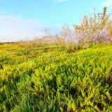 Marais côtiers de paysage de prairie Photographie stock libre de droits