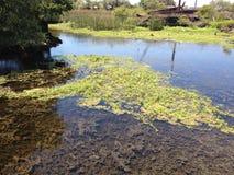 Marais clair de la Californie de l'eau Images stock