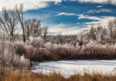 Marais congelé environnant de Frost Photographie stock
