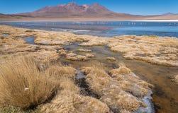 Marais d'Altiplano Photo stock