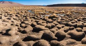 Marais d'Altiplano Photo libre de droits
