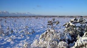 Marais d'Aukstumalos en hiver, Lithuanie Images libres de droits