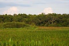 Marais d'eau douce Photo libre de droits