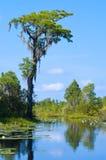 Marais d'Okefenokee Image libre de droits