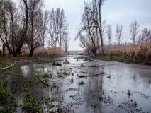 Marais dans l'excédent affecté Karadjordjevo, Serbie Photo libre de droits